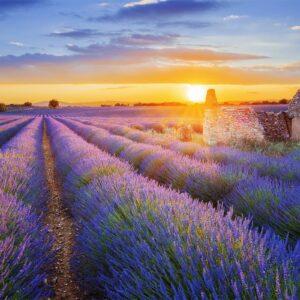 Provence S Koupáním 2021